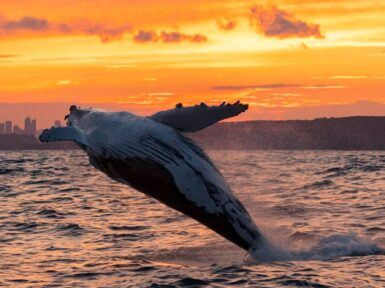 Have a whale of a time at Ingenia Holidays