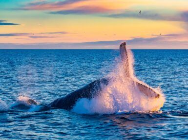 Best spots for whale watching in winter