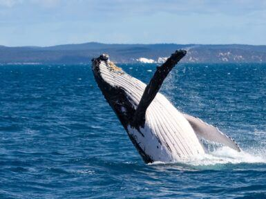 Top 9 things to do in Hervey Bay