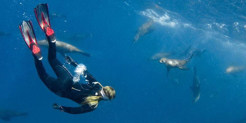 Diving with Seals. Image courtesy of Destination NSW and Sebastian Goldhorn